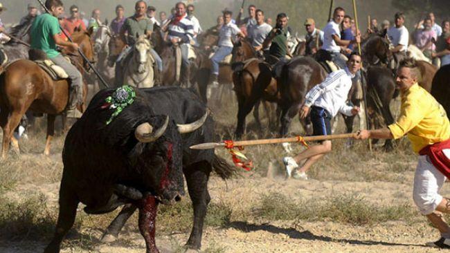 Tordesillas recurre a los tribunales la prohibición de matar el Toro de la Vega