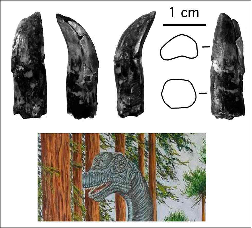 Soriatitan golmayensis, un nuevo dinosaurio español localizado en Golmayo