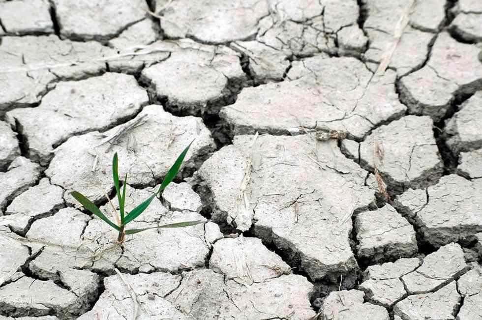 El cambio climático afectará al sector agrario español