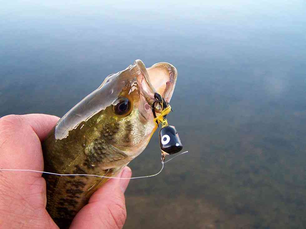 La Junta publica la orden que regula la pesca en la Comunidad en 2018