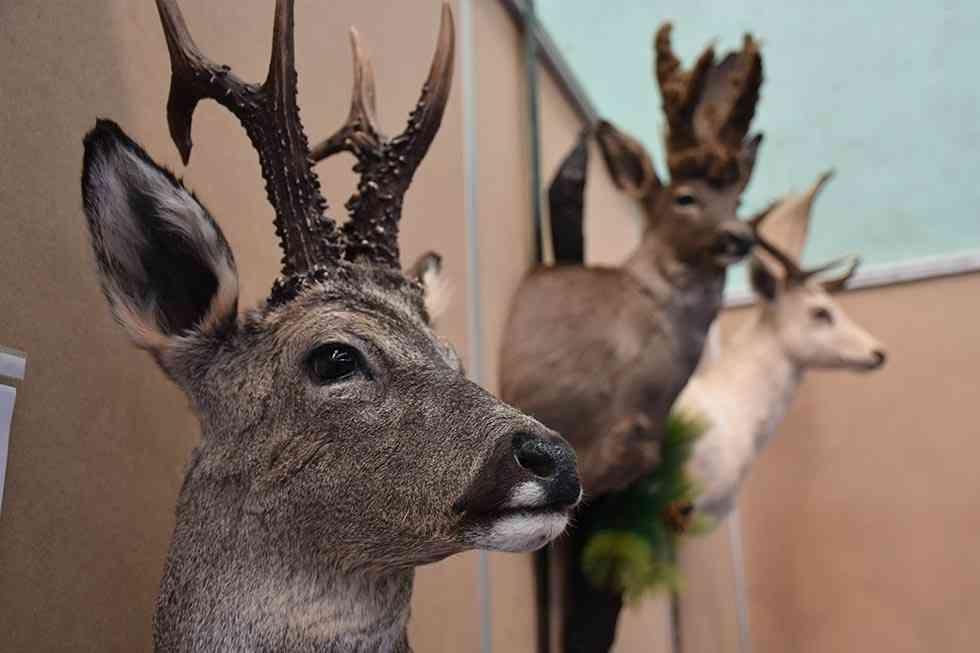 Almazán pide una mejor gestión de la caza para mejorar ingresos del mundo rural