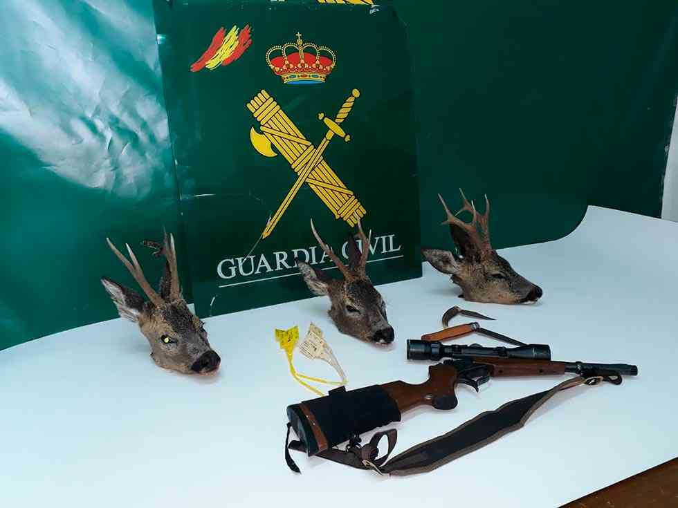 Denunciados dos furtivos de Córdoba con tres cabezas de corzo
