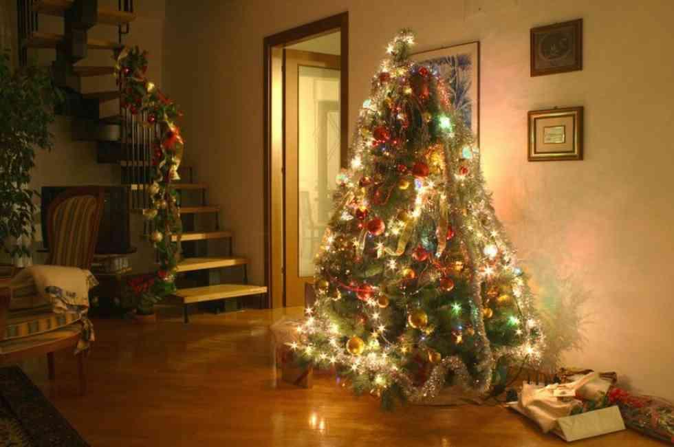 """Reparto de """"pinos"""" de Navidad ecológicos y solidarios"""