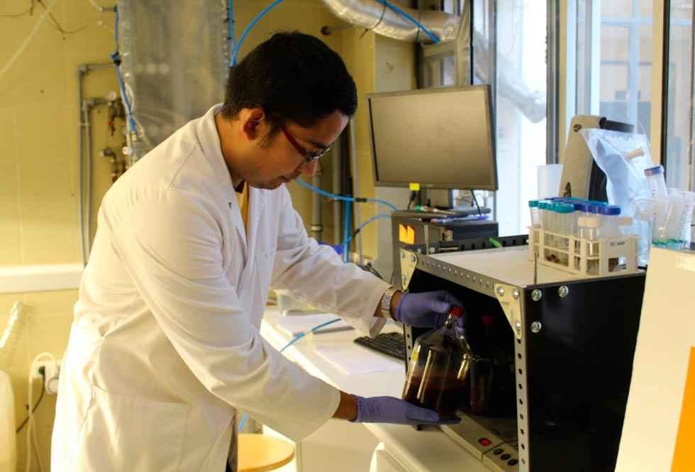 Bacterias púrpuras transforman purines de granjas porcinas en energía limpia