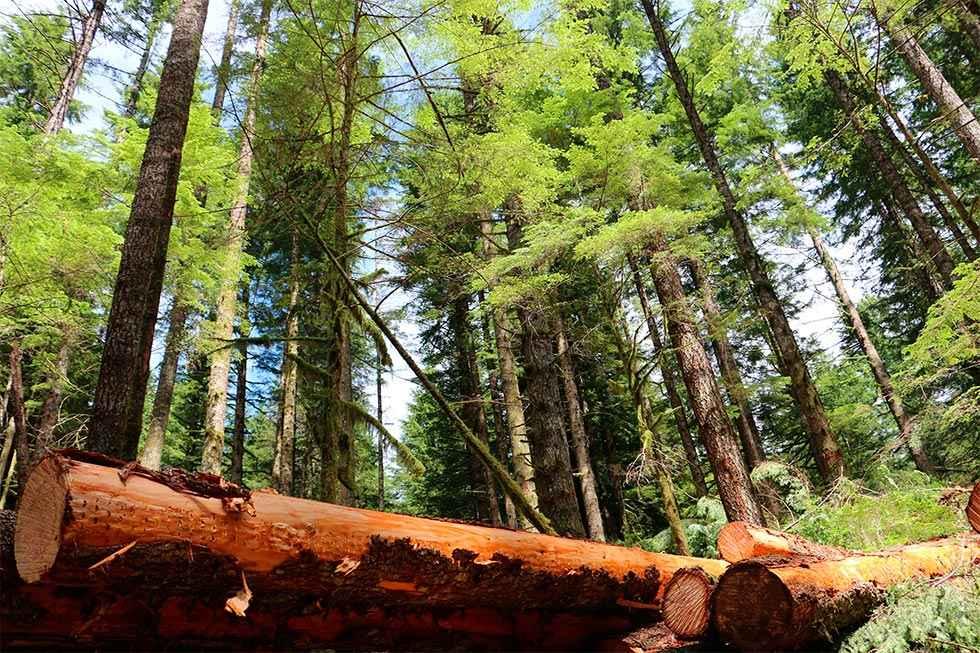 Soria, entre las provincias con mayor licitación de madera