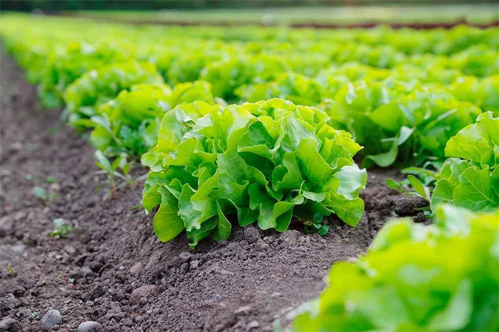 Agricultura ecológica: 50.500 hectáreas y mil operadores