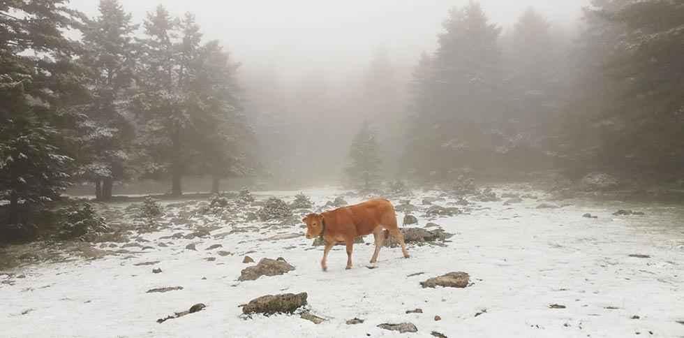 Urbión se tiñe de blanco invernal
