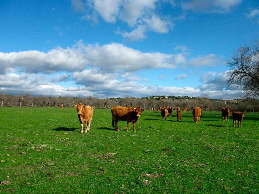 Castilla y León, a la cabeza en ejecución de desarrollo rural