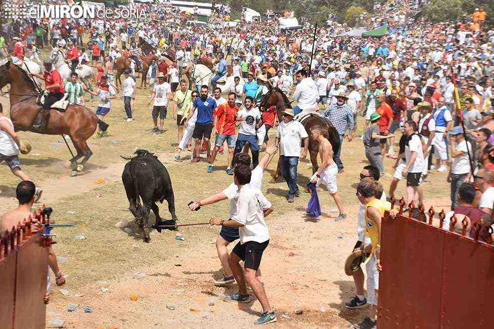 Diez de los doce toros de La Saca entran en la plaza