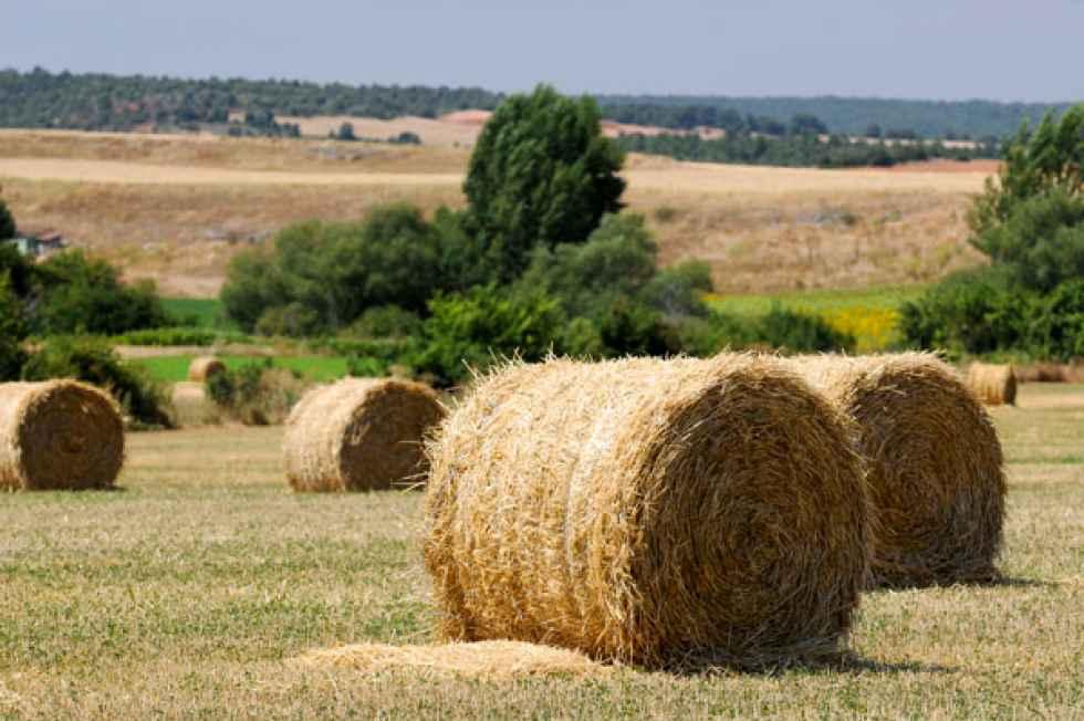 A Coag le preocupa el bajo porcentaje ejecutado del Programa de Desarrollo Rural