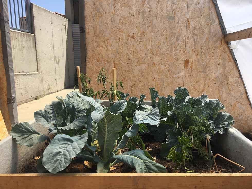 Un invernadero pasivo para huertos escolares, en el CIFP Pico Frentes