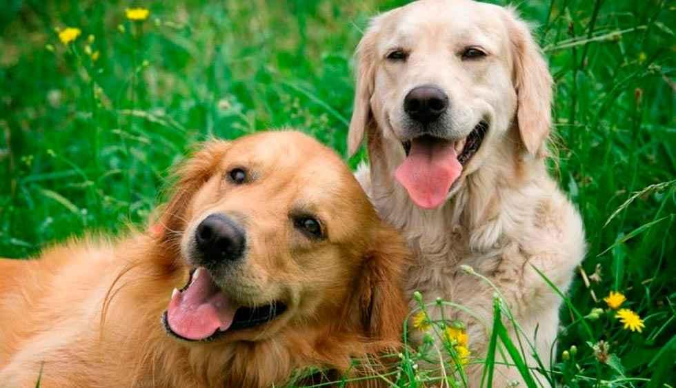 El Ayuntamiento conciencia sobre el cuidado de las mascotas