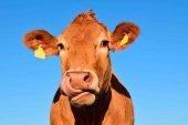 Ayudas para la ganadería extensiva afectada por la sequía