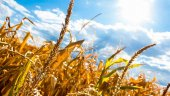 La Junta aprobará ayudas para aliviar al sector agrario en la actual sequía