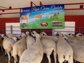Cincuenta expositores en la XI Feria de Ganaderia de Soria