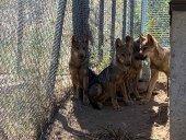 Primeros meses de vida para los lobeznos Sanabria, Tera, Mancha y Llagu
