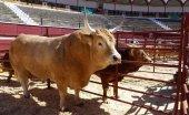 La Diputación apoya la celebración de la Feria Ganadera de Soria