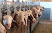 Consenso político para apoyar al sector ovino de leche
