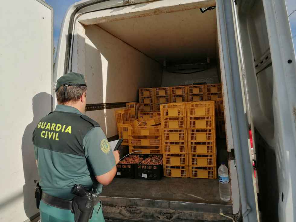Incautan por primera vez un vehículo en comercialización ilegal de setas