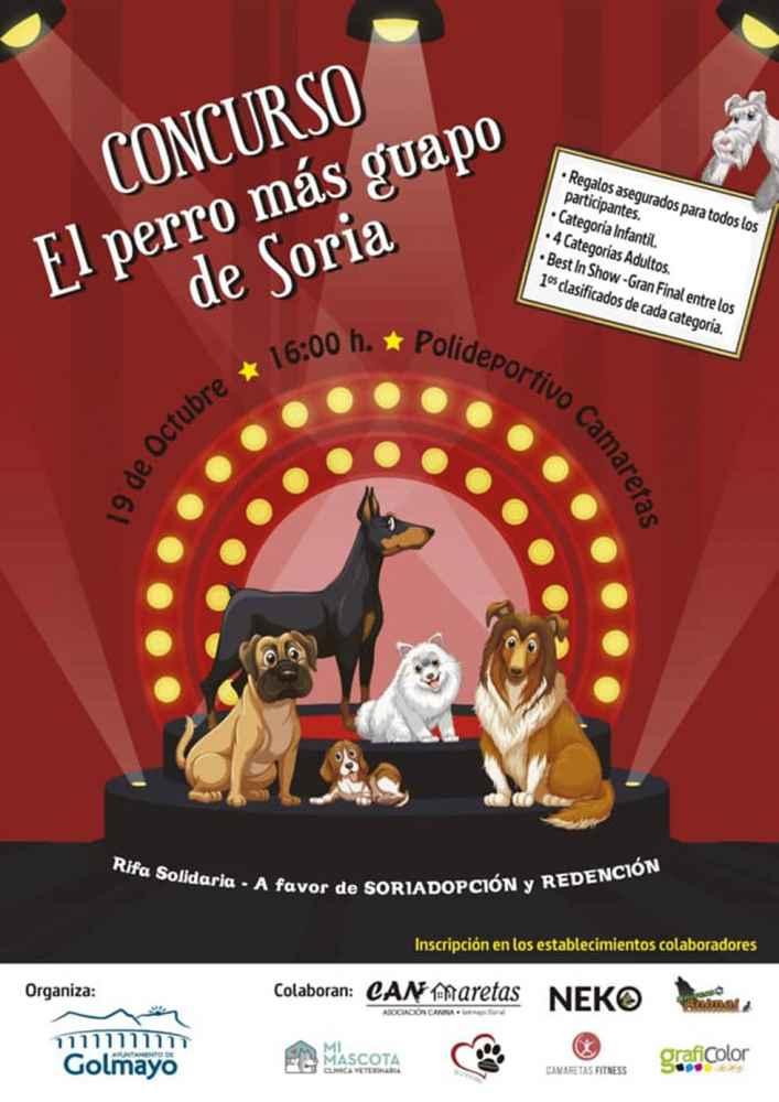 Concurso para conocer al perro más guapo de Soria
