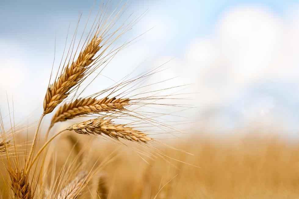Agroseguro bonifica el seguro de cultivos herbáceos