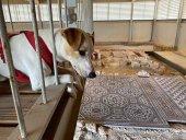 Pipper, el perro