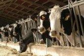 Cuatro asociaciones ecologistas exigen mejor evaluación de vaquería