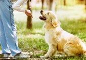 Curso para adiestrar a perros en habilidades saludables