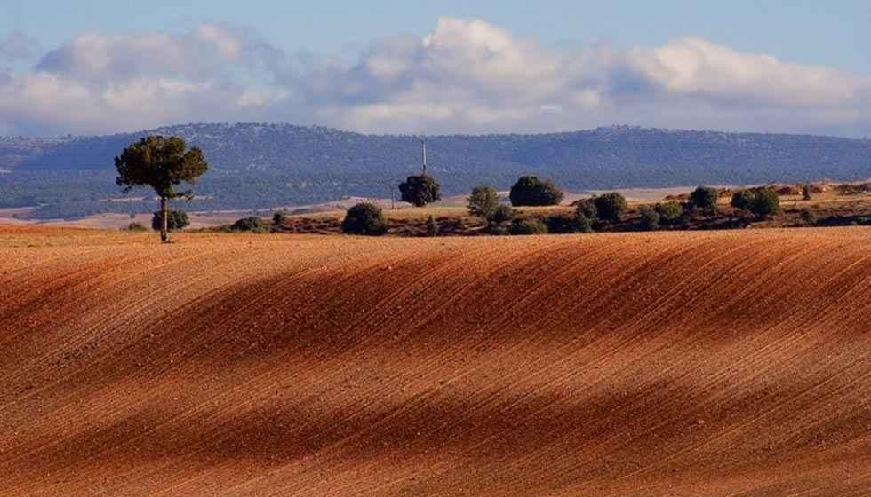 Subvención en Zayuelas para concentración del viñedo