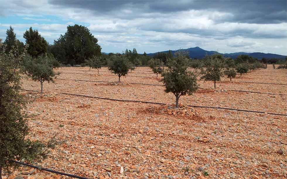 Dos sondeos para explotaciones truferas en Deza y San Esteban de Gormaz