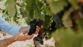 Regadío por goteo para viñedos de Alcubilla de Avellaneda