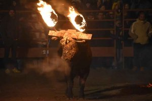 Medinaceli: toro jubilo 2019 - fotos