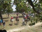 La Comunidad celebra el 12 por ciento de los espectáculos taurinos