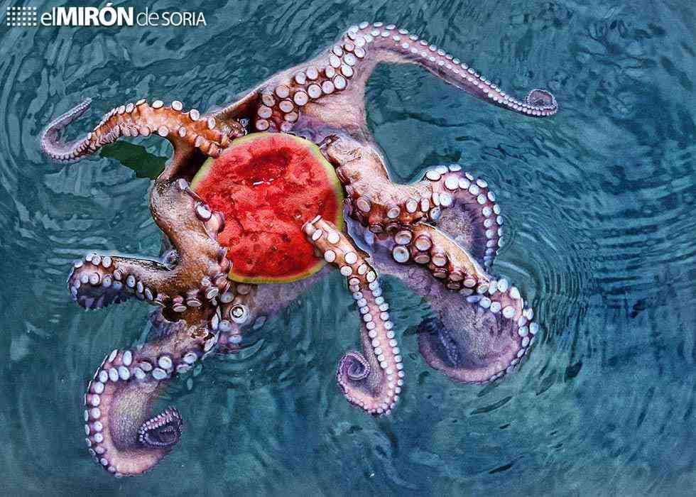 Ganadores del VI Certamen de Fotografía de la dieta mediterránea