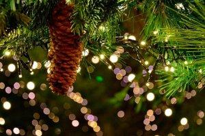 Fechas para el reparto de pinos de Navidad