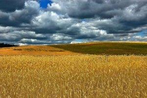 Termina el plazo para contratar seguros de cultivos herbáceos