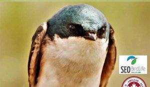 Charla sobre las tres razones por la que se estresa un pájaro