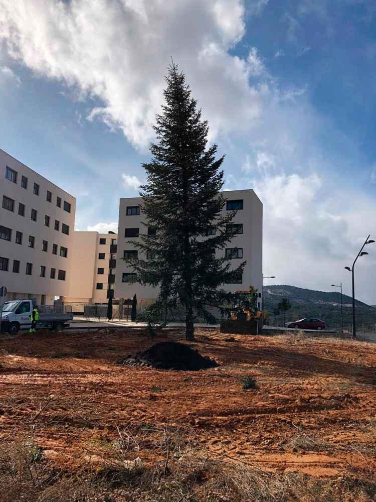 El árbol de Navidad, trasplantado a la avenida de Europa