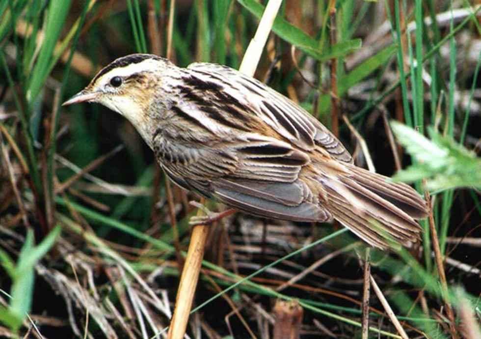 El Día Mundial de los Humedales resalta su biodiversidad