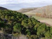 ASFOSO colabora en protección de bosque en Aldeasoña