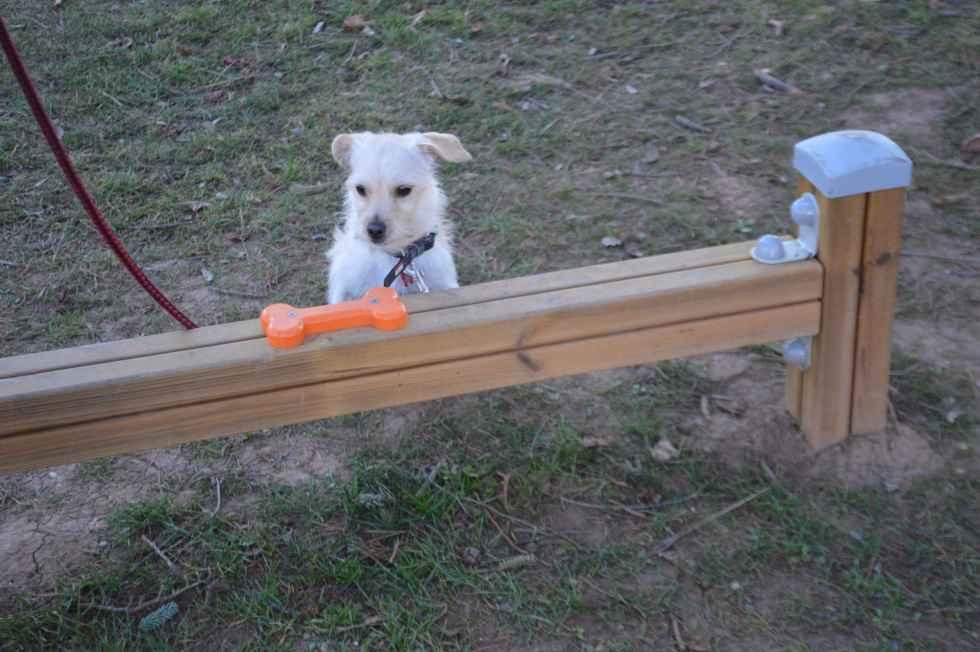 Soria Perruna denuncia parque canino sin vallado