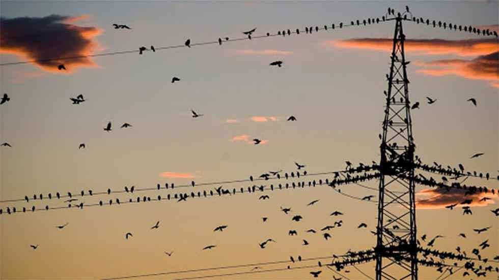 La Junta amplia la zona de protección de avifauna