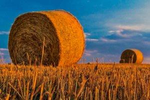Los nuevos agricultores reciben los derechos de pago básico