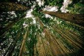 Las licitaciones de madera suman más de cien millones