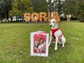 Pipper regresa a Soria para presentar un tebeo