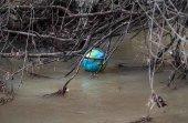 Libera recoge basuras en las riberas del río Izana