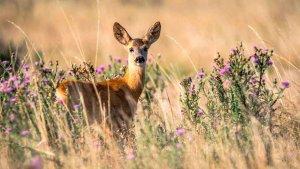 La Junta prohibe la caza y la pesca en el Estado de Alarma