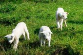 ASAJA urge medidas para sostener al sector ganadero