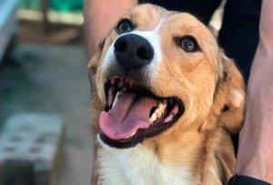 Redención suspende adopciones de mascotas