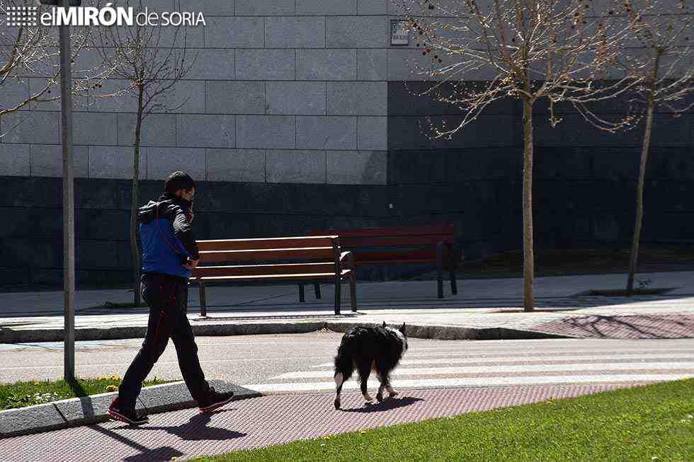 Los veterinarios impulsan red de vigilancia del Covid 19